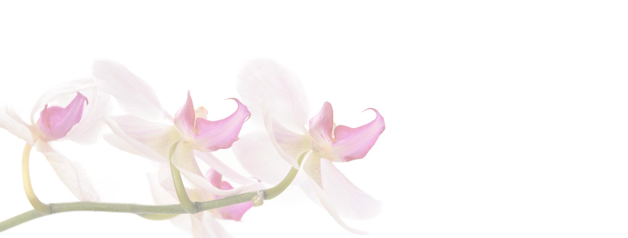 Orchids 150 3