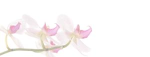 Orchids 150 4