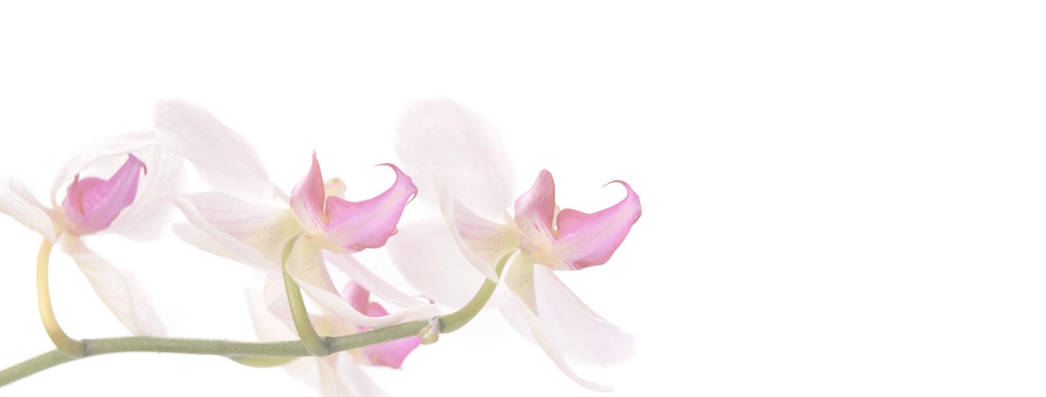 Orchids 150